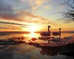 Прекрасны чувства лебедей
