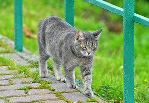 Кошка на смотровой площадке ...