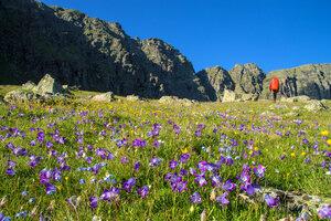 24. Альпийские луга долины Гидам.