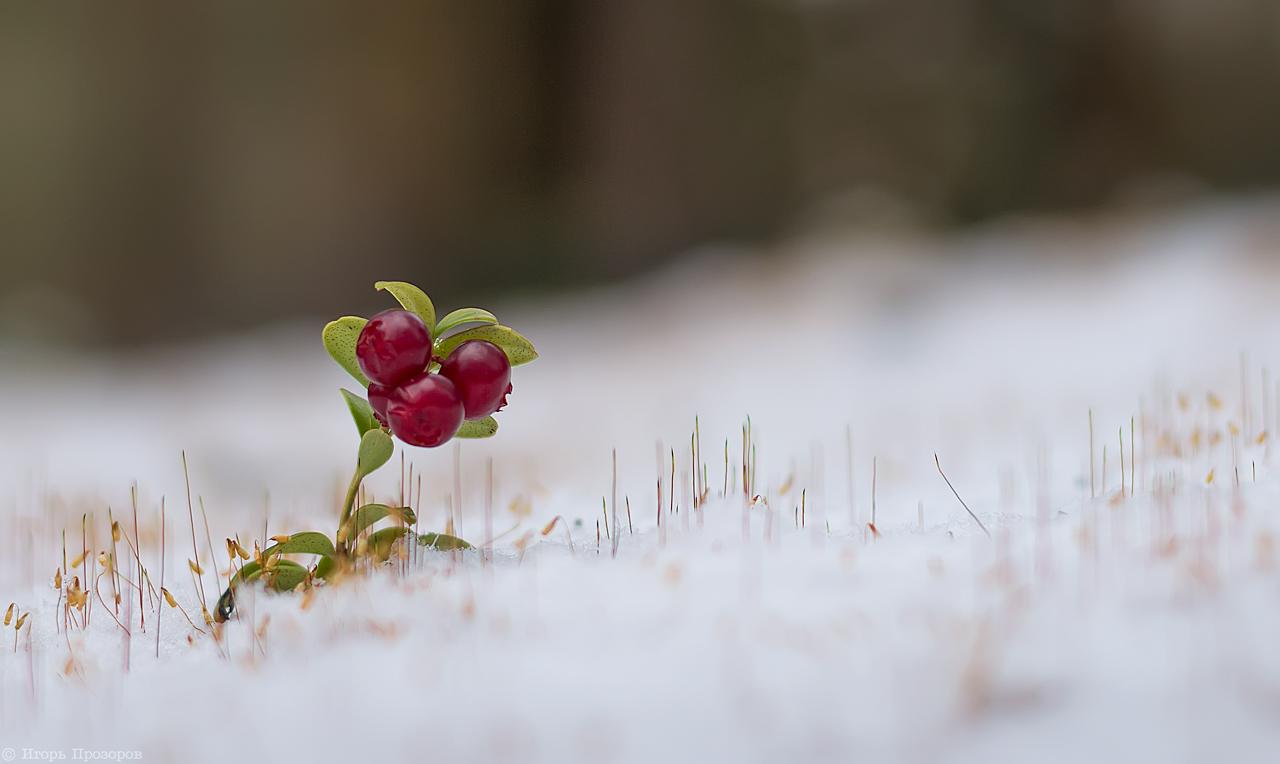 Первый снег...